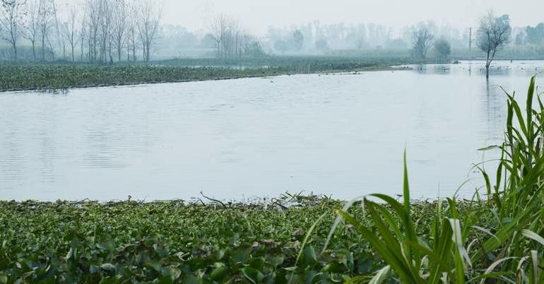 Experts seek river solution